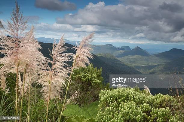 morro da igreja landscape in santa catarina, brazil. - alex saberi stock pictures, royalty-free photos & images