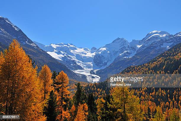 Morteratschgletscher with colorful mountain forest