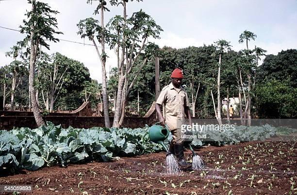 Mosambikaner beim Bewässern eines Feldes 1999