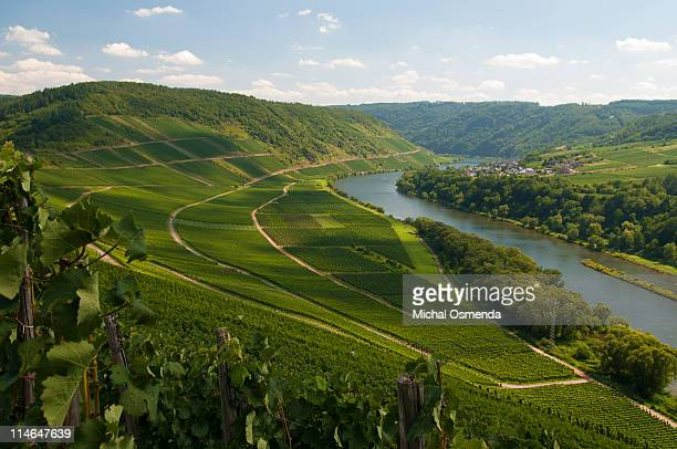 mosel river valley - moselle stock pictures, royalty-free photos & images