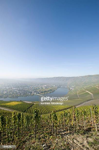 mosel valley at piesport, germany - moselle stock pictures, royalty-free photos & images