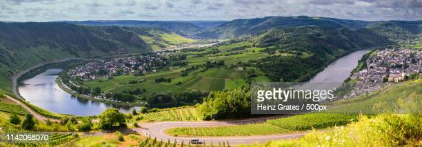 moselle loop - wineyard stock photos and pictures