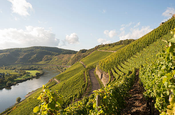 Mosel, Moselle Valley, Marienburg, Puenderich, Zell, Germany Wall Art
