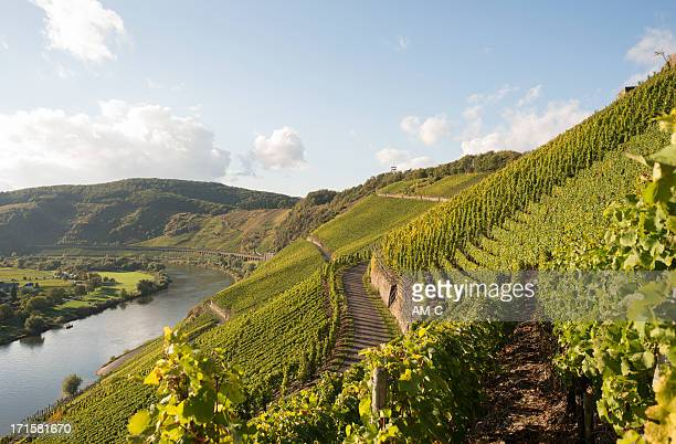 mosel, moselle valley, marienburg, puenderich, zell, germany - lorraine stock pictures, royalty-free photos & images