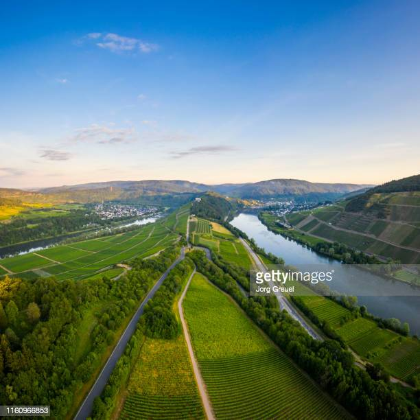 moselle river at sunrise - moselle stock pictures, royalty-free photos & images