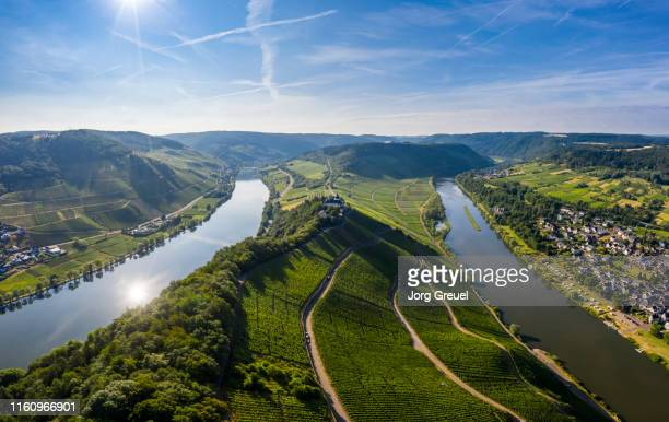 moselle river - moselle stock pictures, royalty-free photos & images