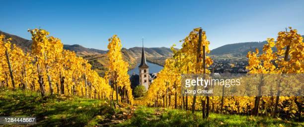 moselle valley in autumn - moselle stock-fotos und bilder
