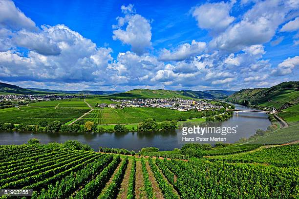 Moselle Valley near Trittenheim, Germany