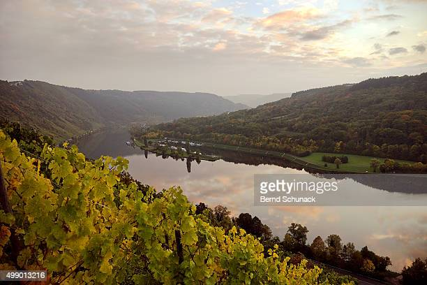 moselle vineyards - bernd schunack stock pictures, royalty-free photos & images