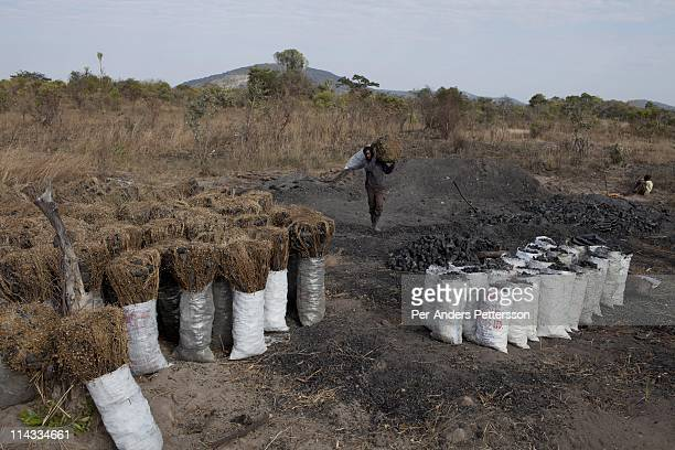 Moses Daka age 46 carries a bag of charcoal at a charcoal production site in a rural area on June 17 called MbaiMbai about 40 kilometers outside...