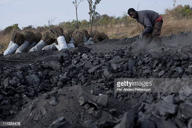 Moses Daka age 46 collects charcoal at a charcoal production site in a rural area on June 17 called MbaiMbai about 40 kilometers outside Lusaka...