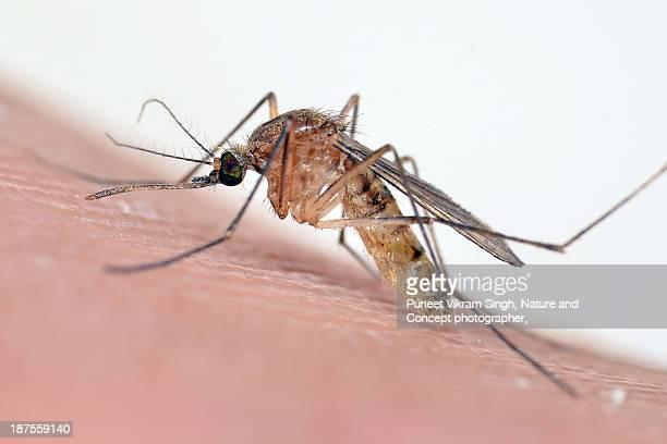mosquito bite - insectenbeet stockfoto's en -beelden
