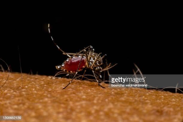 mosquito bites on the hand - ネッタイシマカ ストックフォトと画像