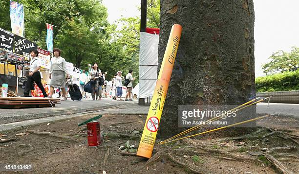 A mosquito coil burns at an event featuring Asian food stalls and a flea market on September 6 2014 in Tokyo Japan The first case of dengue fever in...