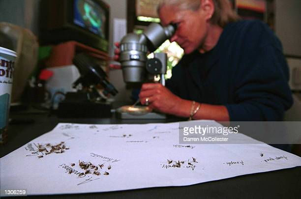 Mosquito identification specialist Betsy Coes attempts to spot July 21 2000 species of mosquitoes that are carriers of the West Nile Virus at Dragon...