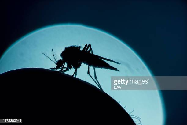 mosquito - tick bite stock pictures, royalty-free photos & images