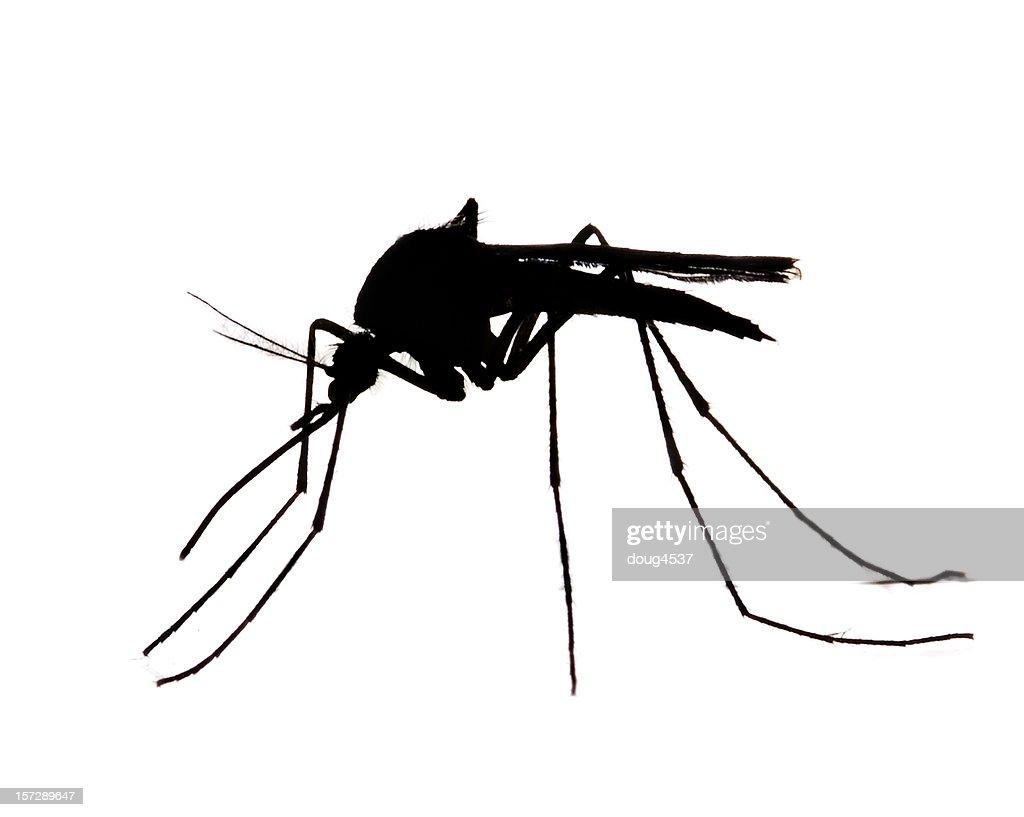 Mosquito Silhouette : Stock Photo