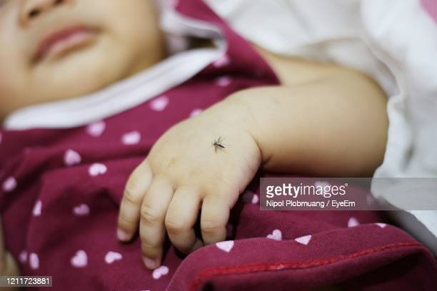 mosquito sucking blood on human skin - zika virus stock pictures, royalty-free photos & images