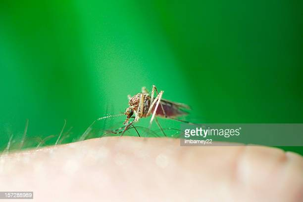 mosquitos suck! - insectenbeet stockfoto's en -beelden