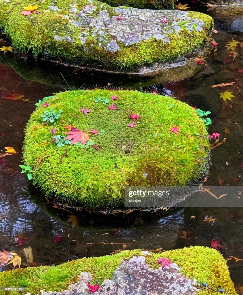 Moss and fungus rocks, Kyoto, Japan : Stock Photo
