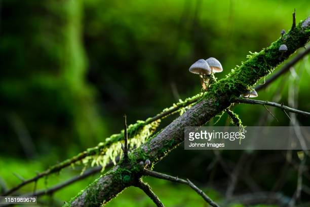 moss and mushrooms on log in forest - moos stock-fotos und bilder