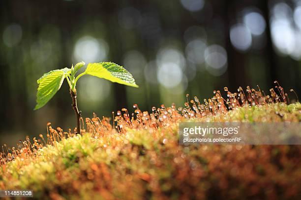 Moss and sapling