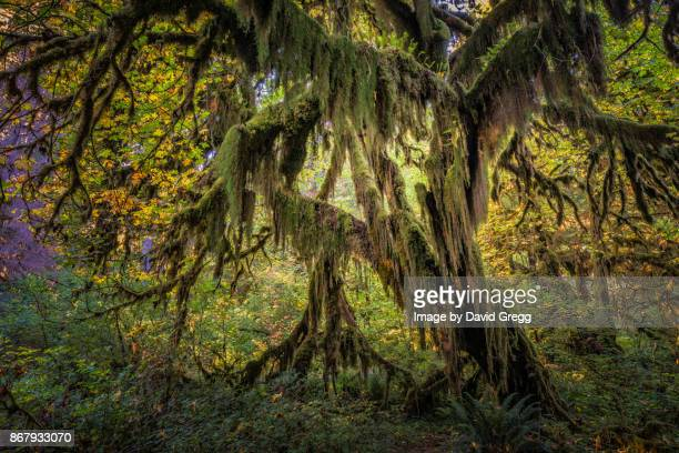 moss appeal - olympic park stock pictures, royalty-free photos & images