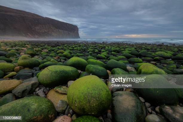 moss covered boulders at rackwick bay, hoy, orkney, scotland - bay of water stock pictures, royalty-free photos & images