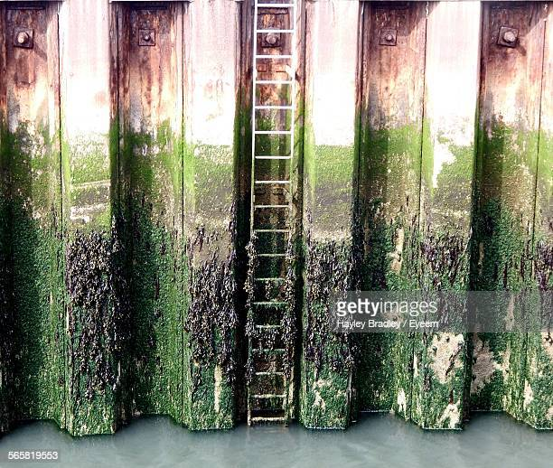 Moss Covered Corrugated Iron In Water
