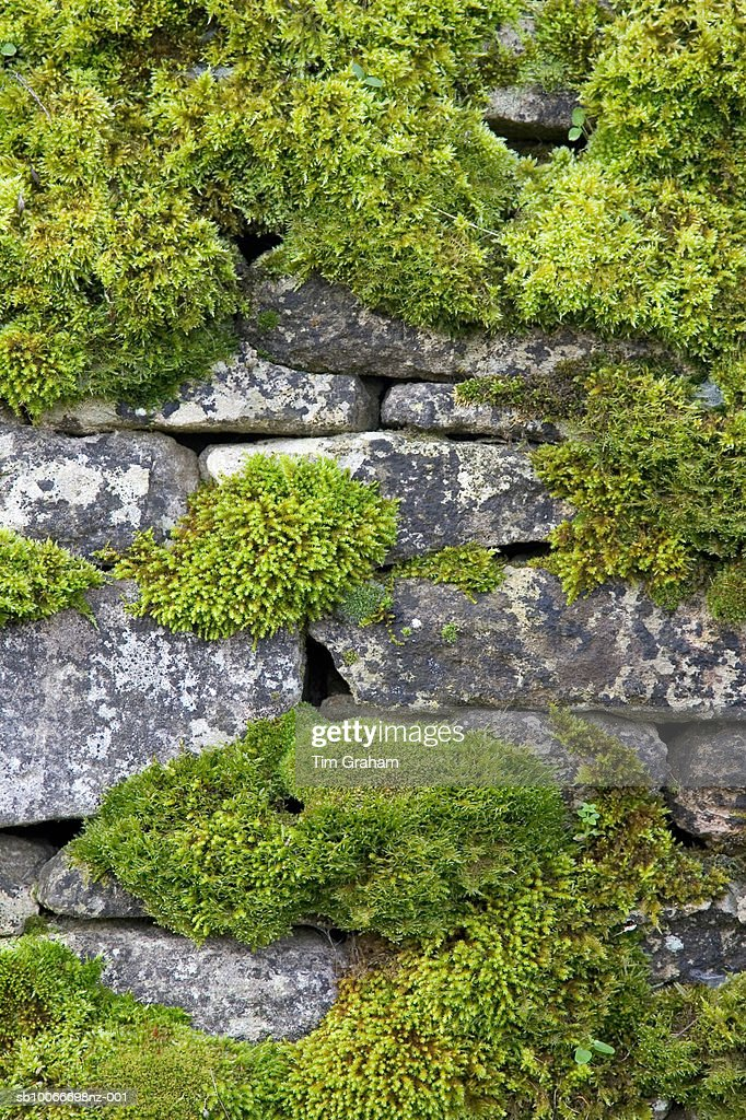 Moss Covered Dry Stone Wall, UK : Photo