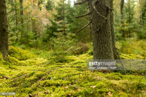 Moss covered ground in the forest
