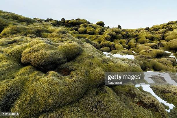 moss covered lava field in southern iceland - moos stock-fotos und bilder