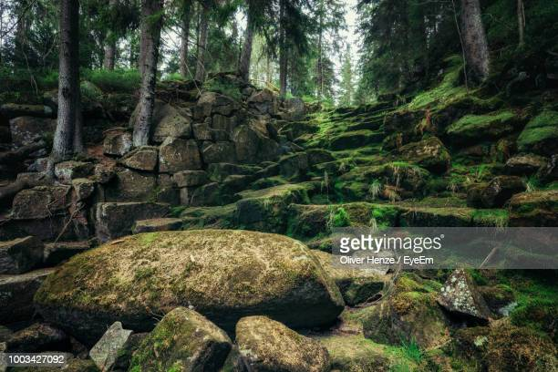 moss covered rocks by trees in forest - moos stock-fotos und bilder