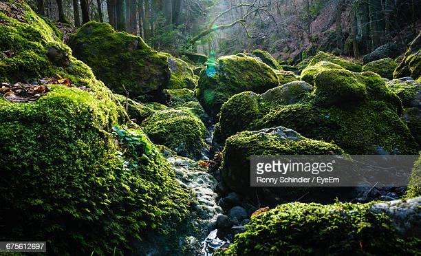 moss covered rocks in forest - moss stock pictures, royalty-free photos & images