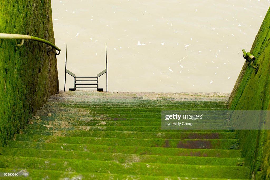 Moss covered steps leading to River Thames : Stock Photo