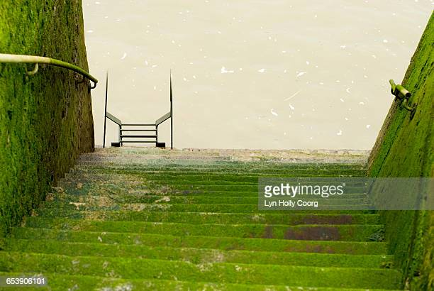 moss covered steps leading to river thames - lyn holly coorg stock pictures, royalty-free photos & images