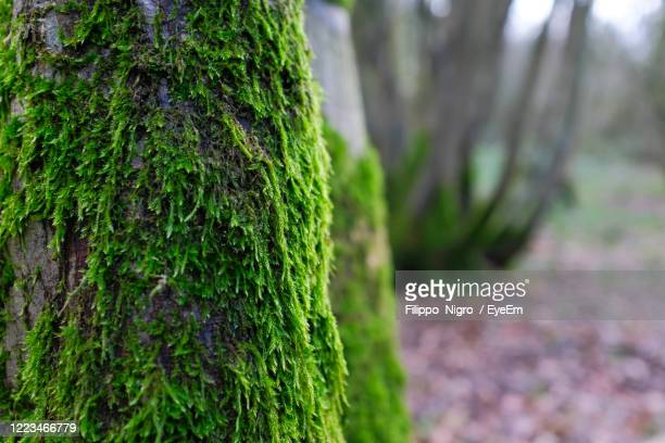 moss covered tree - tree trunk stock pictures, royalty-free photos & images