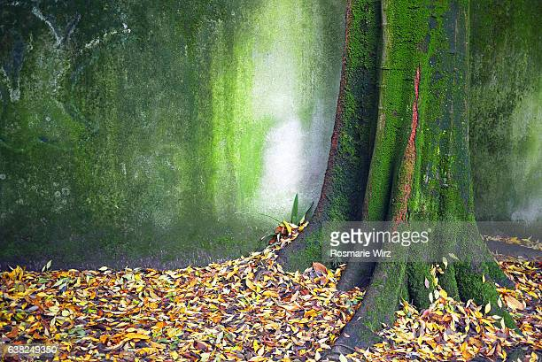moss covered tree trunk against mossy wall, fallen leaves. - エメラルドグリーン ストックフォトと画像