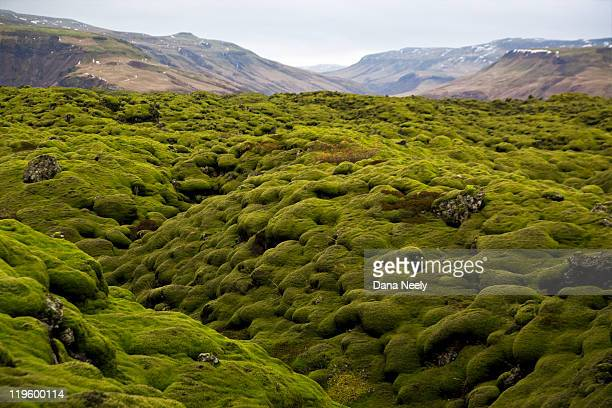 moss covered volcanic lava field, iceland. - lava plain stock pictures, royalty-free photos & images