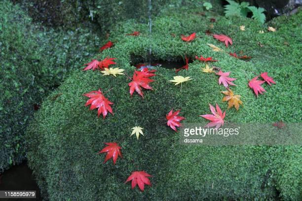 moss garden of kyoto japan - karesansui photos et images de collection