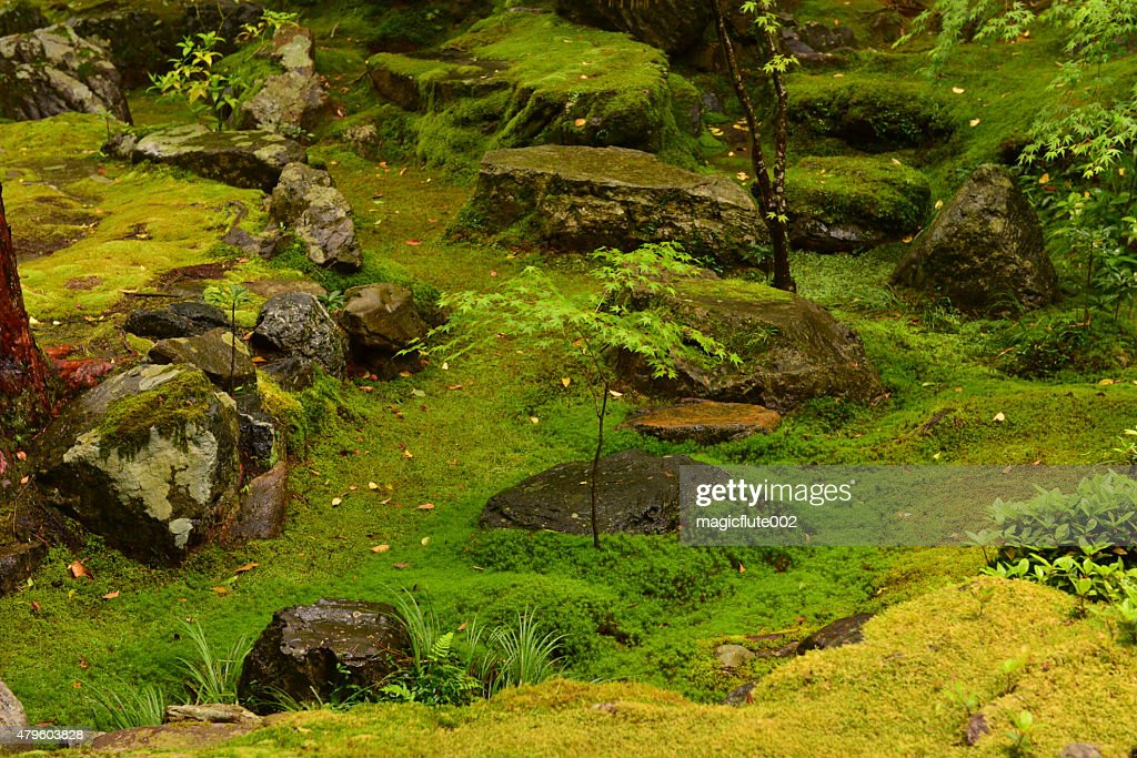Moss Garden Of Saihoji Temple Kyoto High Res Stock Photo Getty