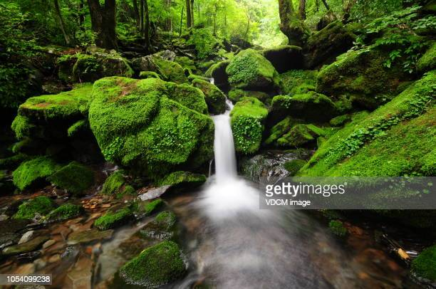 vd700 moss gegok - bohemia czech republic stock pictures, royalty-free photos & images