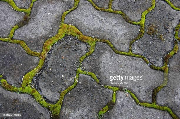 moss growing between interlocking grey paving stones - herringbone floor stock photos and pictures