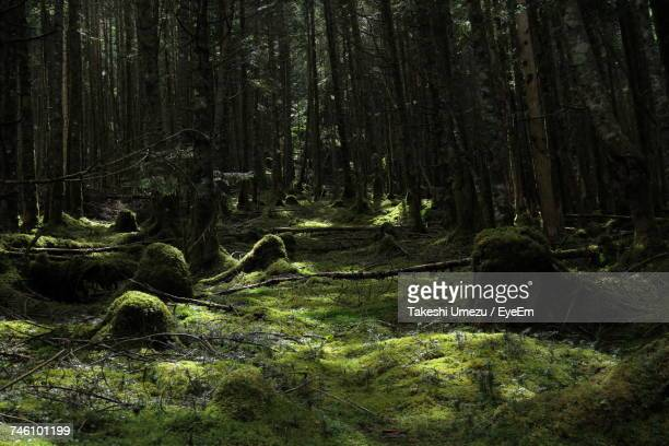 Moss Growing In Forest
