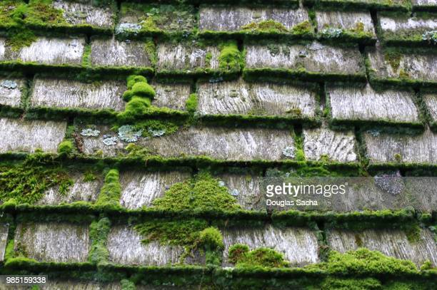 moss growing on a wood shingle roof - herpes zoster fotografías e imágenes de stock