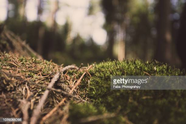 Forest Floor Stock Pictures Royalty Free Photos Images Getty