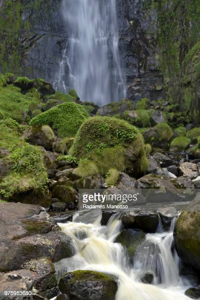 Moss growing on rocks by waterfall, Corupa, Santa Catarina, Brazil