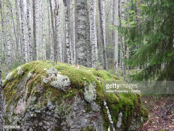 moss growing on rocks in forest - boulder rock stock photos and pictures