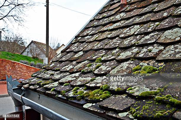 Moss Growing On Slate Roof Of House