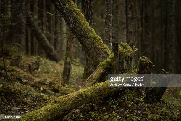 moss growing on tree trunk in forest - arne jw kolstø stock pictures, royalty-free photos & images